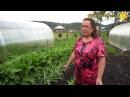 Совет ленивой огородницы не поливать и не кормить сорняки