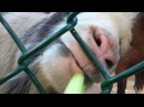 The Carrot Feeding Park Animals Close Up
