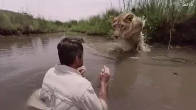 Astonishing footage shows a lioness jump and hug animal expert