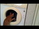 Кот Бакс стирает белье, кошка Евра обеспокоена
