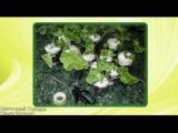 Упаковка цветов для отправки почтой. Цветочный городок Ольги Косенко