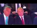 Не откладывая в долгий ящик: Путин начал обучать Орбана теории дзюдо сразу же после обещания дать несколько уроков.