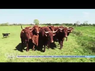 Tromperies et intoxications alimentaires : les nouveaux scandales de la viande 2