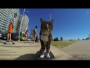 World s Best Skateboarding Cat Go Didga Go =^ ^=