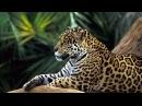 Дикая природа Амазонки Самая большая река Документальный фильм