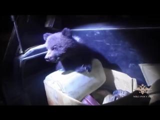 Полицейские обнаружили в картонной коробке на трассе двух медвежат