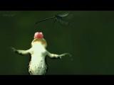 Louis Armstrong - What a Wonderful World (Attenboroughs - Wonderful World BBC Video)
