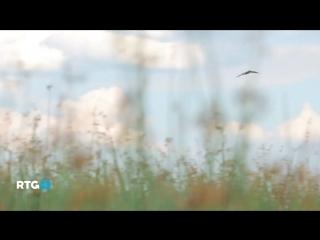 Природа Cестрорецкой низины (RTG TV)