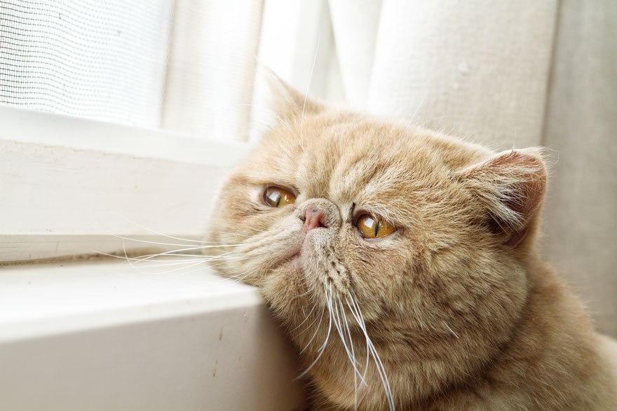 О чём грустят кошки? #кот #котейка #грустныйкот #грустьпечаль
