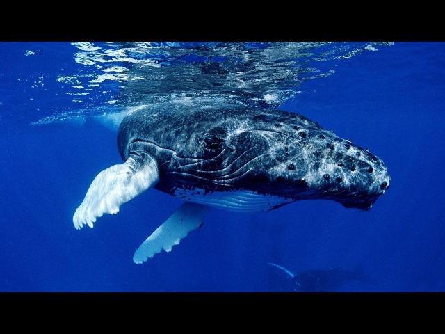Звуки океана пение китов для релаксации и расслабления Ocean Sounds whale singing