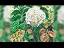 Сказка о жабе и розе, Всеволод Гаршин аудиосказка слушать онлайн