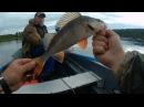Открытие рыбалки 2017 на волге!часть 2. Клев после дождя. Два окуня на один крючек :)