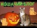 кошачий блог о стримах