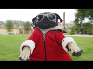 Fall Out Boy - Irresistible (Starring Doug The Pug) ft. Demi Lovato