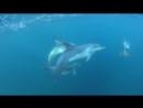 Дельфины. Балаклава