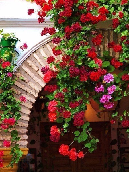 kSkhs4iwe2Y - Цветущие пейзажи Испании