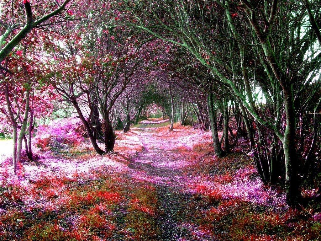 Цветущие пейзажи Испании - фотографии осенних пейзажей