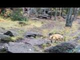 Красноярцы кормят пугливую лису на Столбах