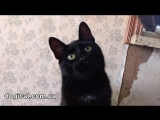 Коты Gaia - new )