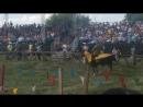 Великий Булгар конница