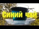 Синий чай из Тайланда.