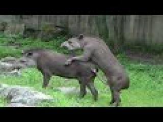 Самые смешные спаривания животных Funny animal mating
