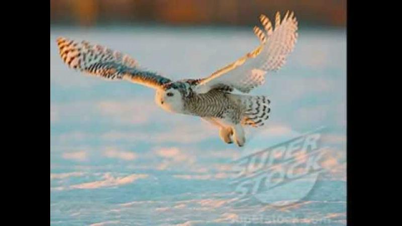 Keiko Matsui White Owl