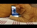 Слепой кот очень любит игру этого пианиста