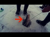 Щука Ловля Щуки на Жерлицы Бешеный Клев Щуки на Живца Рыбалка Видео