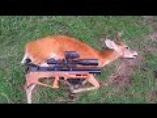 Caza de venado con rifle pcp, Deer hunting with air rifle
