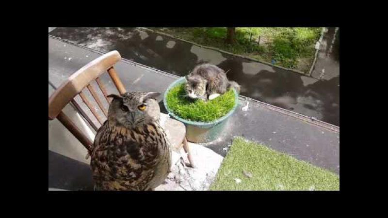 Филин Ёль пасёт котика на травке