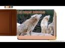 Как говорят животные звуки животных - развивающее видео для детей 2