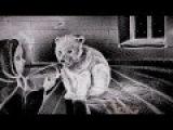 Amazing snow film by Kseniya Simonova&ampWWF