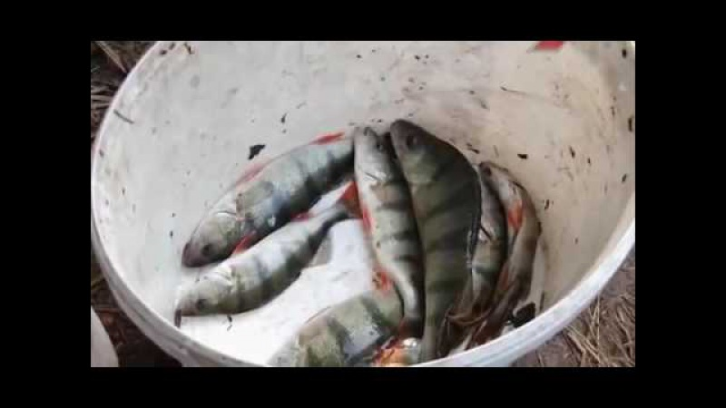 Рыбалка с Нормундом Грабовскисом. Фидер: Открытие сезона. (спиннинг, фидер, джерк, воблер)