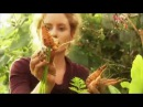Edible Garden 2 Salads - Homesteading Self-Sufficiency