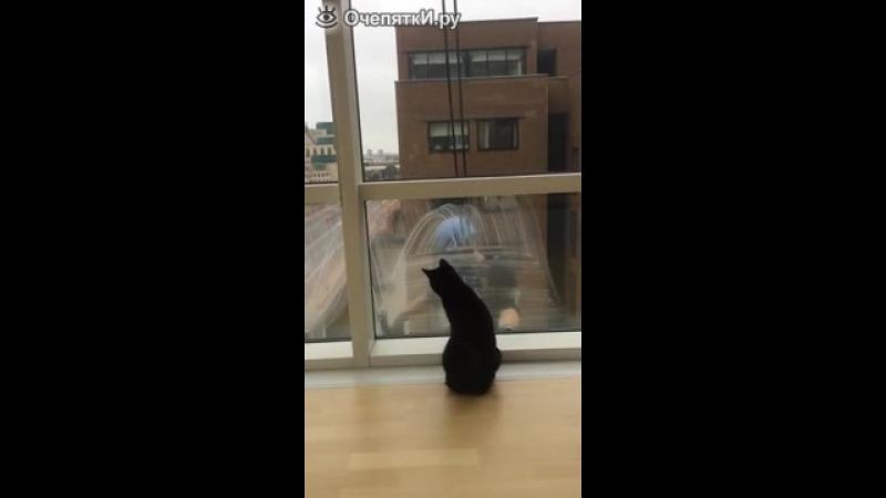 Кошка играет с мойщиком окон