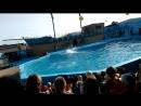 Дельфинарий Архипо-Осиповка 2017