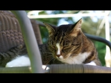 Most_tricks_by_a_cat_in_one_minute_-_Meet_the_Record_Breakers