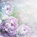 Нежные цветочные картинки для вашего творчества