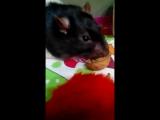 Спок и Жорик едят орех