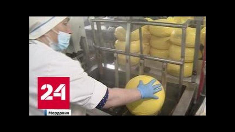 Гудроновый сыр: россиянам продают аллергены под видом нормальных продуктов