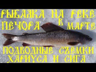 Рыбалка на реке Печора в марте. Подводные съёмки хариуса и сига