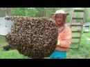 Про роение пчёл как это было в 2017 часть I
