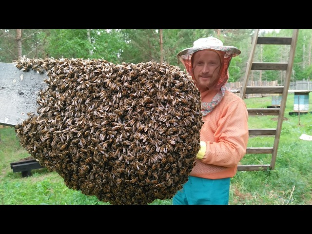 Про роение пчёл, как это было в 2017, часть I