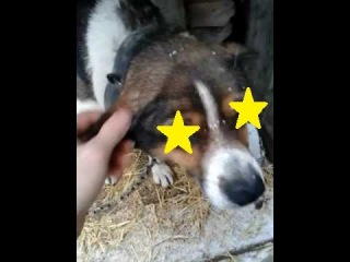 Рябчик - Звезда YouTube