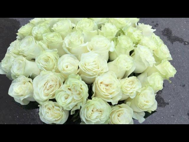 Белые Эквадорские розы сорта Мондиаль