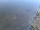 0068 150718 52.955953 36.083522 Орёл дикий пляж Козий парк