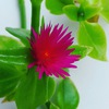 Ботаника и экология растений