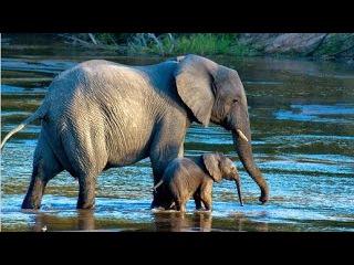 Мир животных. Дикая природа. В объективе. Документальный фильм National Geographic.