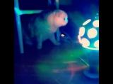japanese_kid_10969 video